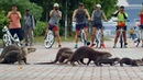 The Otters of Singapore Cities Natures New Wild BBC Earth