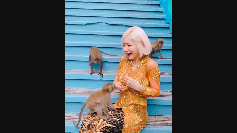쿠알라룸푸르 원숭이 들이랑 놀기! 🙉🙈🐵🙊🐒🧡