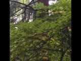 Беличьи разборки в парке