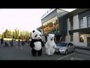 Белый и Панда в парке у ТРК АРЕНА 😎