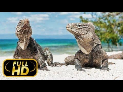 Дикая Природа Таиланда. Земля Удивительных Контрастов / FULL HD - Док. Фильм 2018 Amazing Animals TV