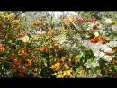 Экзотические цветы и пение птиц...