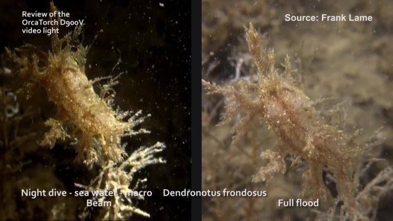 Underwater test D900V by Underwater Photographer Frank Lame