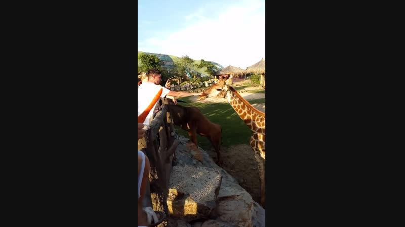 Vinperland zoo