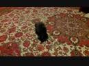 Сеня игривый котик у друзей