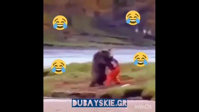 кунфу с медведем