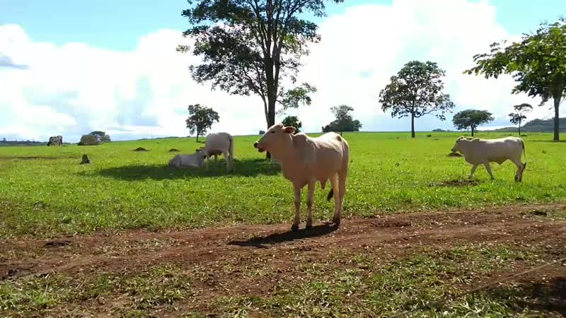 Vacas 11/01/19 às 16:13