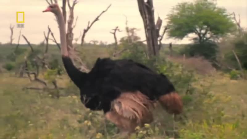 Доисторические хищники — Хищные птицы ящеры