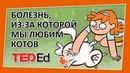 🔶 Существует ли болезнь из за которой мы любим котов TED Ed на русском