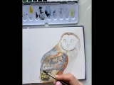 Barn Owl - its so cute and fluffy that I just want to cuddle with it all day long