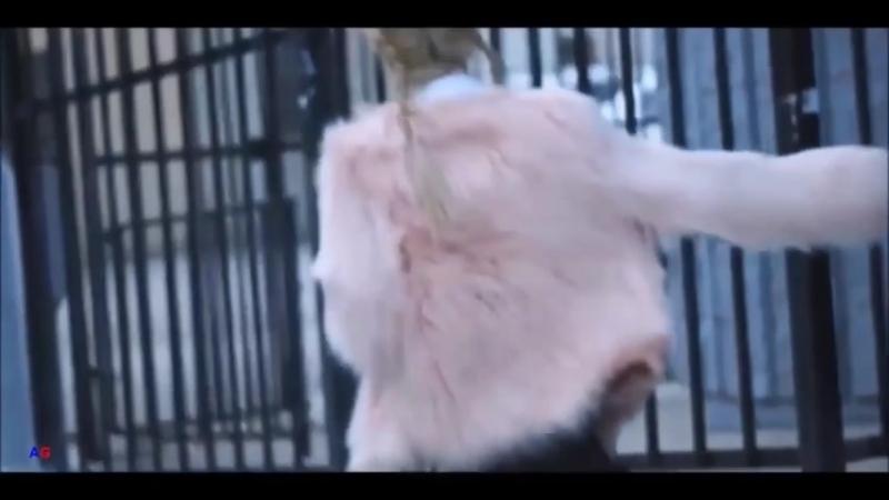 Plicherss - Pleasure (Original Mix) [Video Edit]