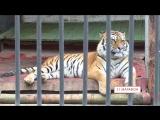 21 марафон Липецкий зоопарк