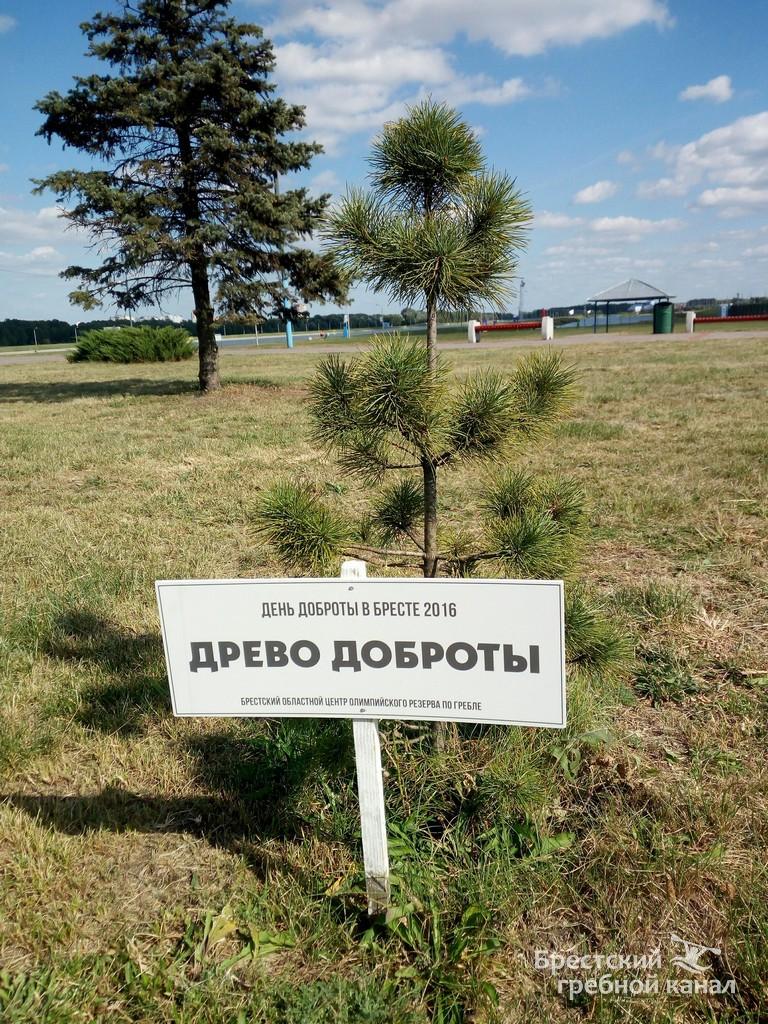 """День открытых дверей и """"древо любви"""" на гребном канале"""