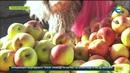 Полезный совет как правильно выбрать яблоки