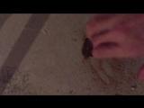 ЖК Жемчужина Виктории - стяжка