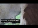 В Чжухае на юге Китая показали редкого детеныша ламантина