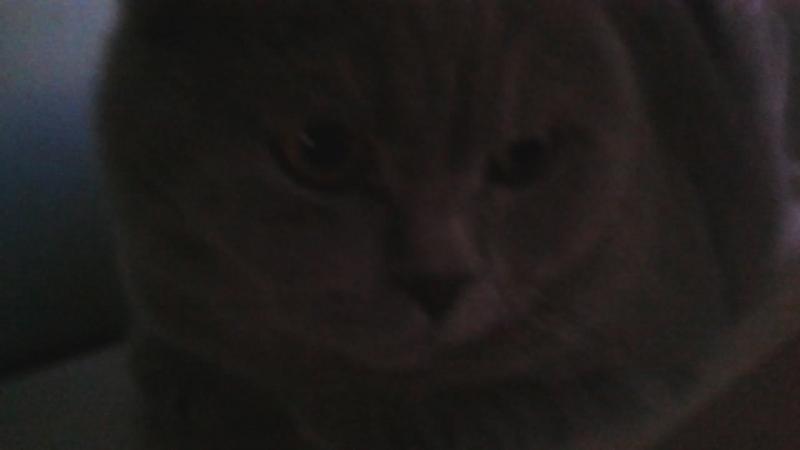 экзистенциализм кота