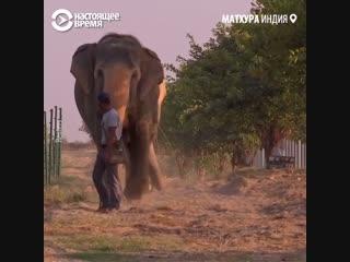В Индии открыли клинику для слонов