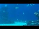 Underwater observatory Eilat city Israel