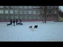 Липецк- аэросъёмка собачек у 5й школы
