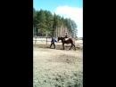 конный клуб темная лошадка принцесса марго катается очень зачестили в клуб мы