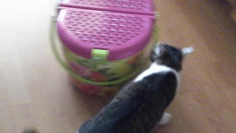 Кузька пытается открыть коробочку.mp4