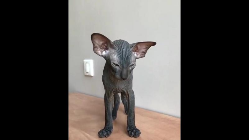 Завели бы себе такого котика?