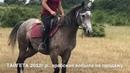 Продажа лошадей арабской породы конефермы Эквилайн, тел., WhatsApp 79883400208 кобыла Тайгета