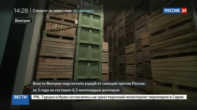 Новости на Россия 24 • За три года антироссийских санкций Венгрия потеряла 6,5 млрд долларов