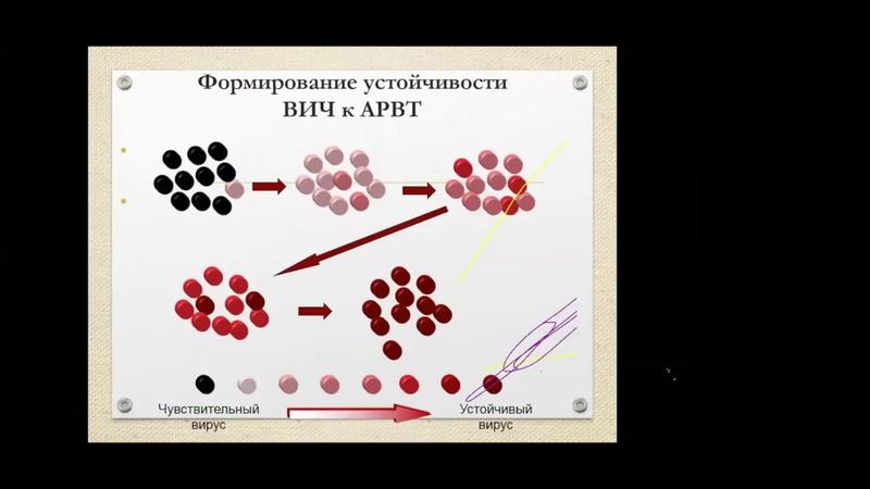Как правильно начать лечение ВИЧ (Екатерина Степанова)