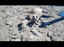 Кадры как с картин Босха выжженая земля мертвые животные и живые мертвецы 2 часть