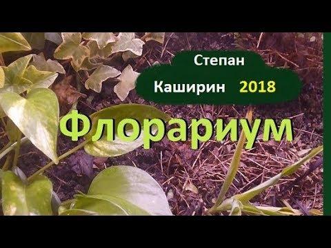 Вечный флорариум Степана Каширина.