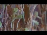 Оживающие Лилии и Змеиные Нашествия #Греция #Кефалония #Богородица #Лилии