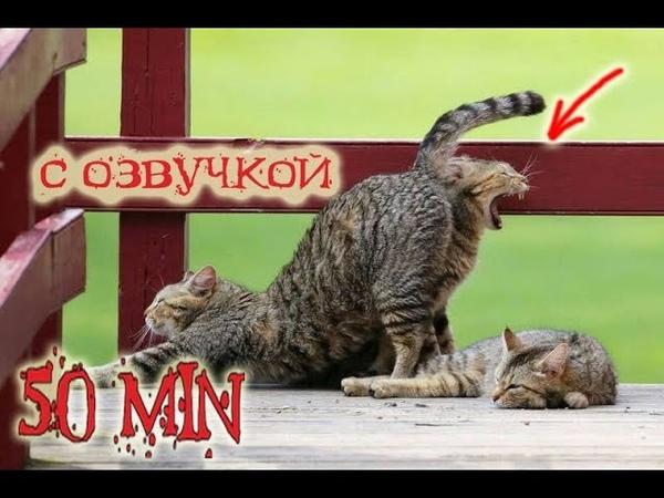 Приколы с котами Магия и Коты и смешная озвучка животных от PSO