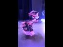 Шоу- балет «Шоколад» танец Цыганский