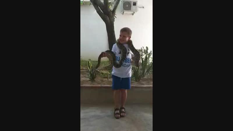 цылавать змею как это