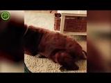 Реакция кота на пук собаки