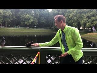 О голубях, людях и скорости))