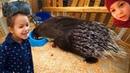 КОНТАКТНЫЙ ЗООПАРК ДЛЯ ДЕТЕЙ Petting zoo Кормим гладим играем с животными Поляковы