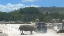 Rhino charges at car in Mexican safari park