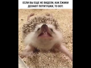 Даже ежики делают потягушки)