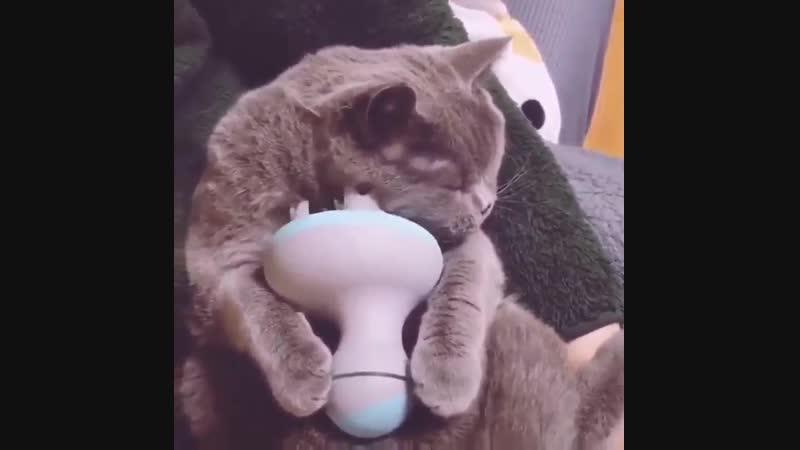 Вот всегда знал, что некоторые коты живут лучше, чем некоторые люди.