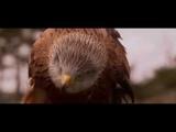 Shnobic - Небесный орел (Doom rockPost)