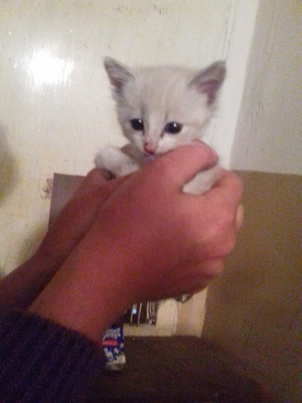 Пристраивается котенок в добрые руки пишите в личку https://vk.