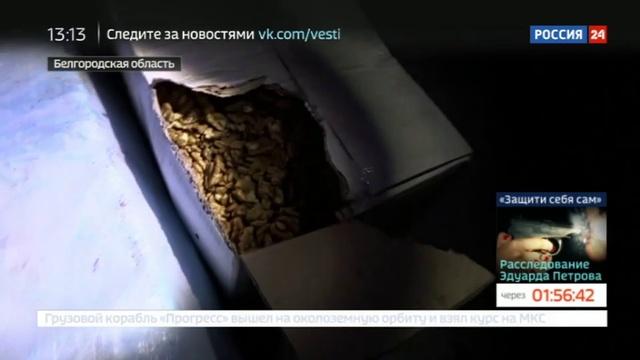 Новости на Россия 24 • Российские пограничники задержали 20 тонн сала и орехов с Украины