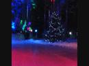 Сказочный лес))