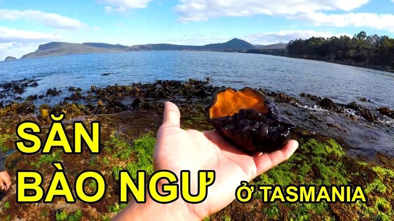 3. SĂN BÀO NGƯ THIÊN NHIÊN bắt được sên biển cực độc. Catching ABALONE with poisonous sea slug
