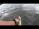 Рыбалка на спининг 🎣 ловля щуки