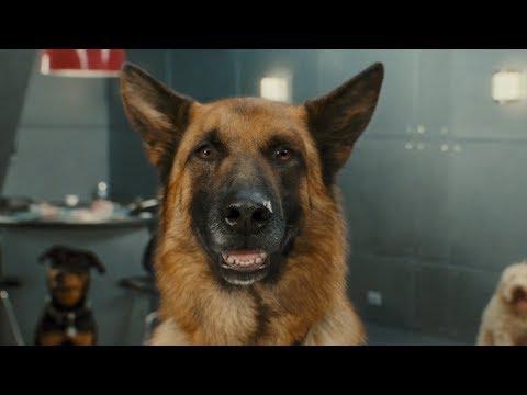 Psy i koty Odwet Kitty   2010   cały film   full HD   1080p   polski dubbing