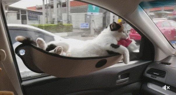 Лежанки для кота - 🔥 © alipab.ru. алиэкспресс алиэкспресспокупки...